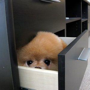 hidden_dog