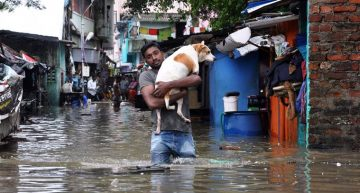Tapping Twitter Sentiments: A Complete Case-Study on 2015 Chennai Floods